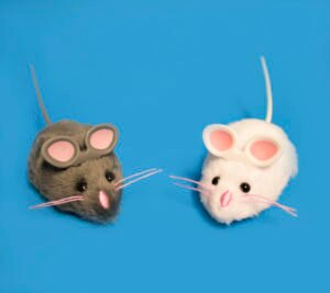 Creature Feature: HEXBUG Mouse Robotic Cat Toy
